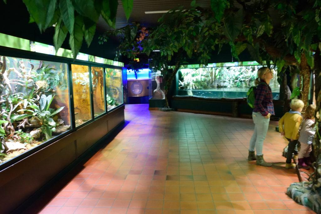 爬虫類の展示コーナー