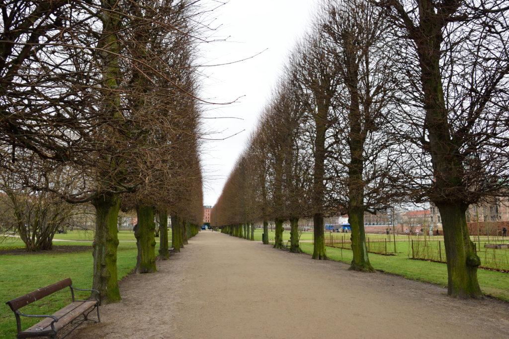 枯れ木が並ぶ様子。壮観。