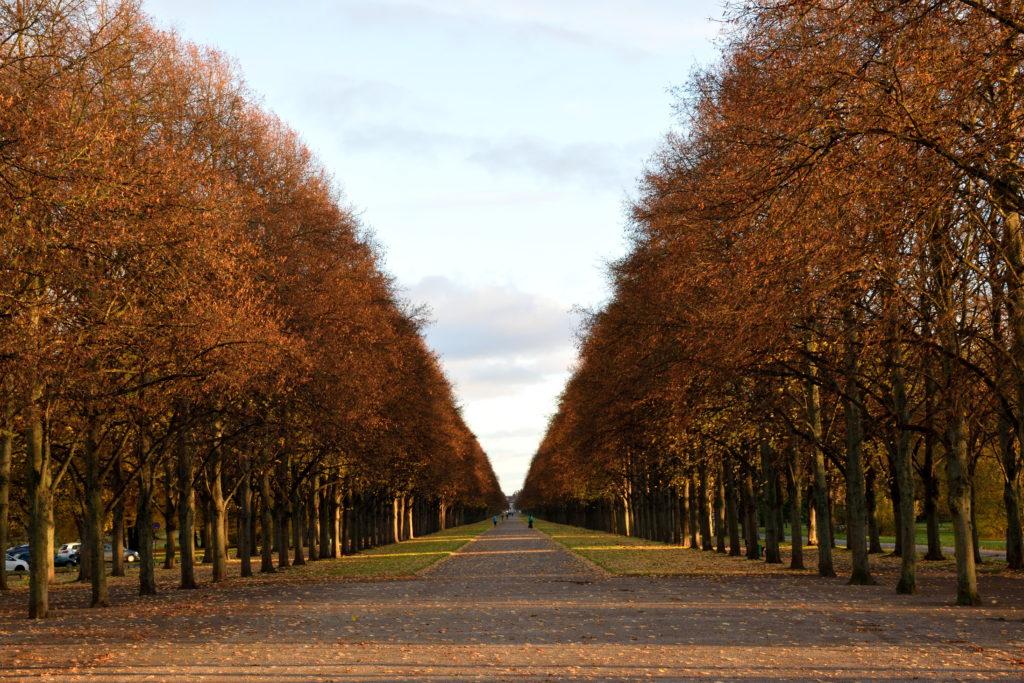 ハノーファーの並木道