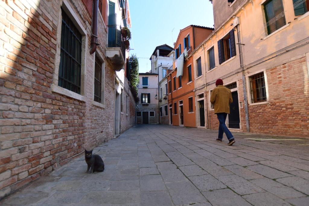 ベネチアにいたネコ