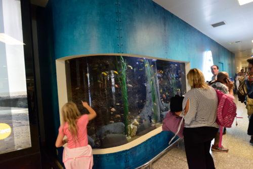 マルタ国際空港の水槽