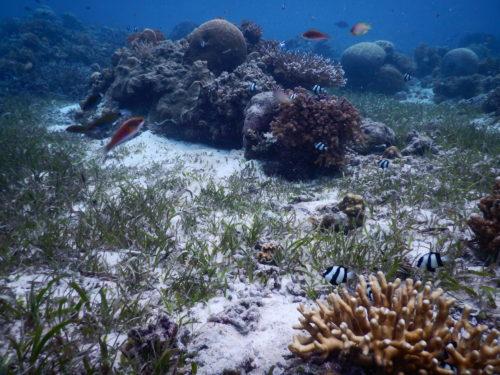 ナルスアン島のスポットの海中