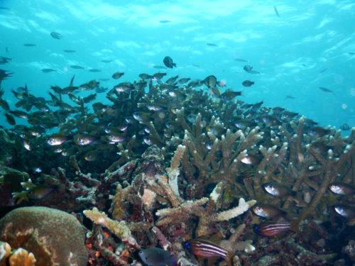 サンゴ帯にいた魚たち