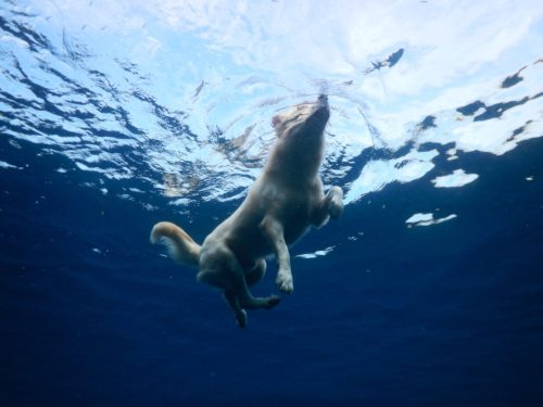 海で犬かきをする犬を下から