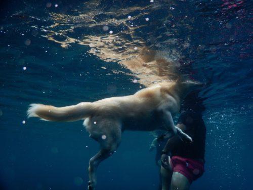海で犬かきをする犬を海中から