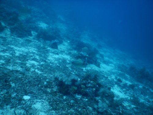 フィリピン・ナルスアン島の海中