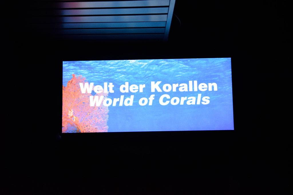 サンゴの展示