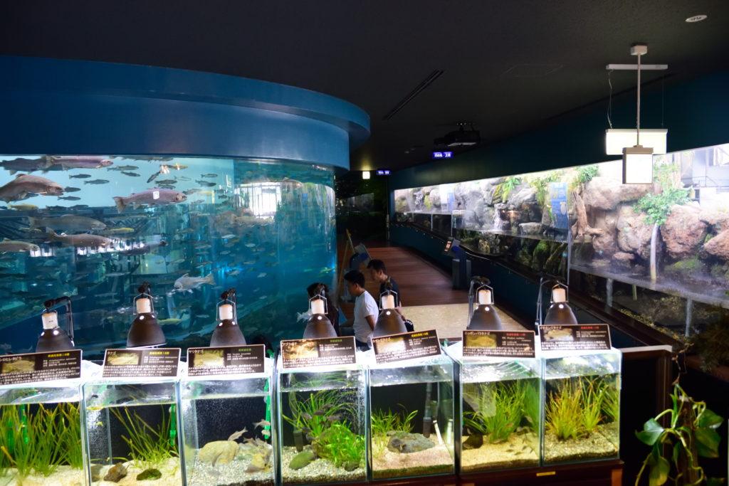 水族館メインフロア