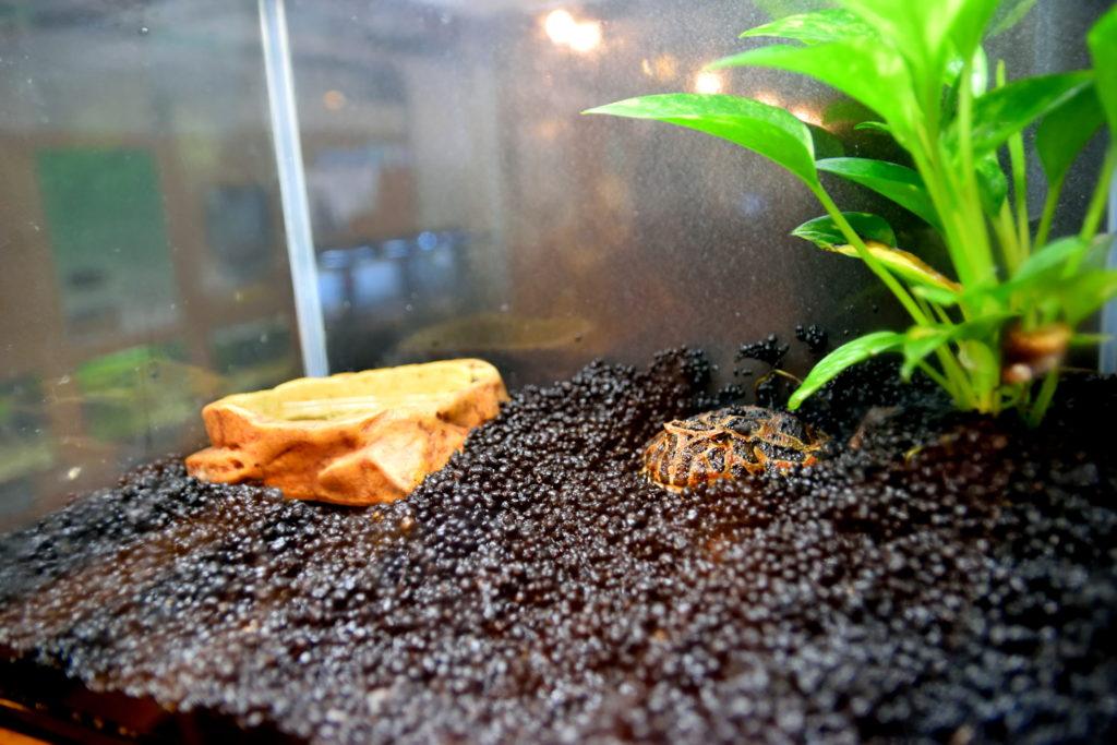 水族館にいたカエル