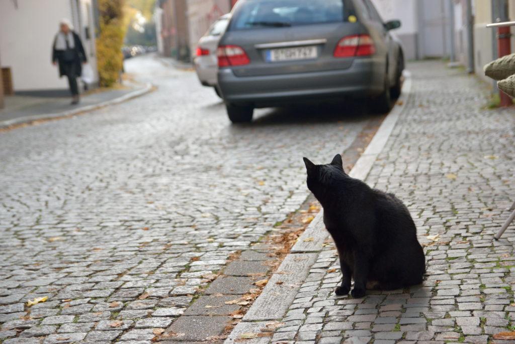ドイツの街並みに佇む黒猫