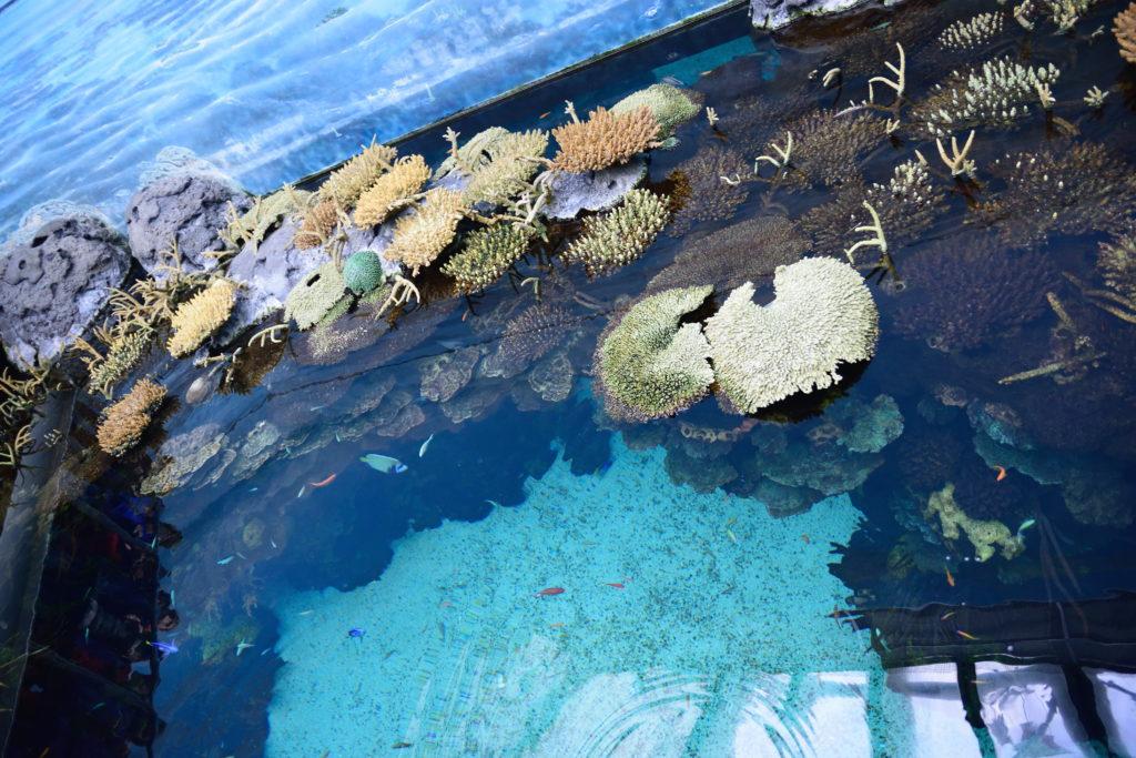 サンゴの展示を上から