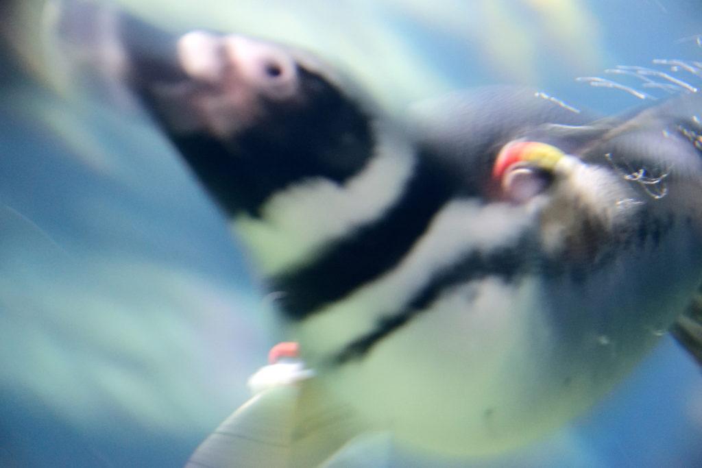 躍動感のあるペンギン
