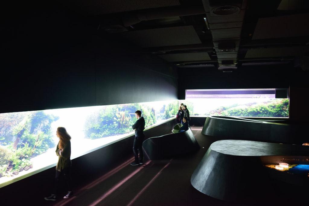 リスボン水族館特別展の様子