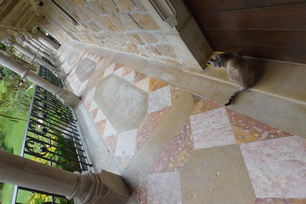 宮殿にいた猫