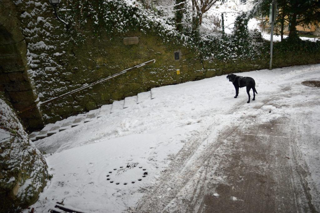 雪の中佇む黒い犬