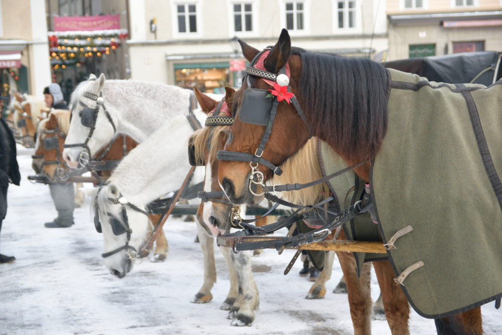 馬車をひく馬