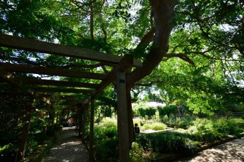 ハノーファー、ベルクガルテンの生い茂る樹木