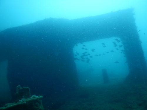船に群がる魚