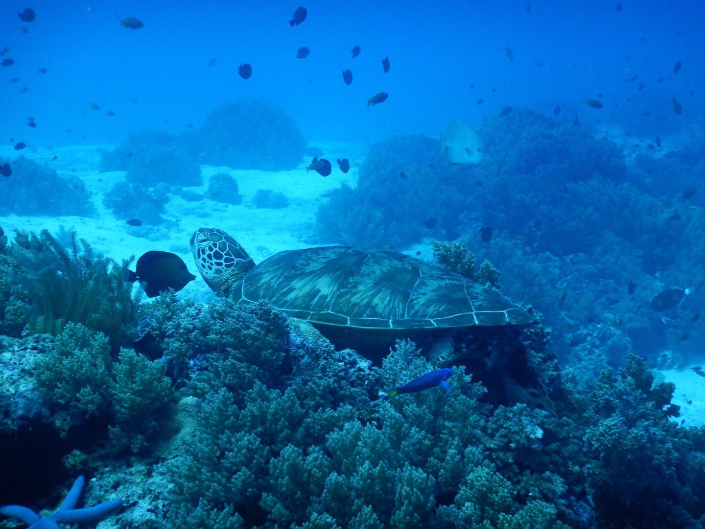 岩場のウミガメ