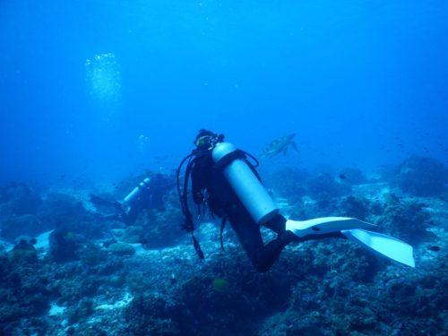 ダイバーに追いかけられるウミガメ