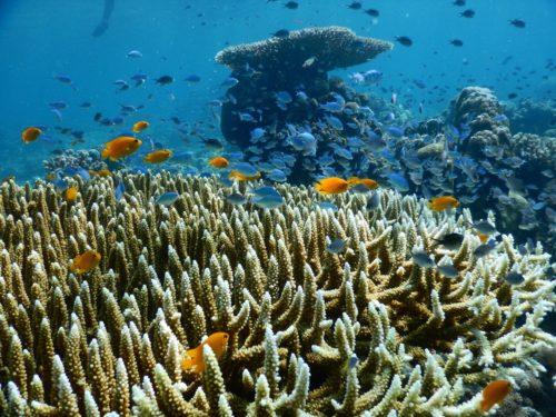 フィリピンのサンゴ