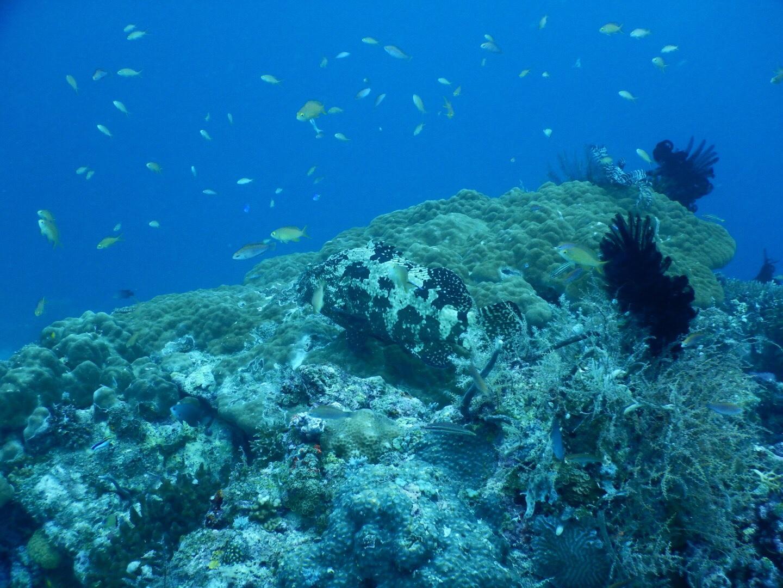ダイナマイト漁に驚かされたフィリピン・ナルスアン島ダイブ
