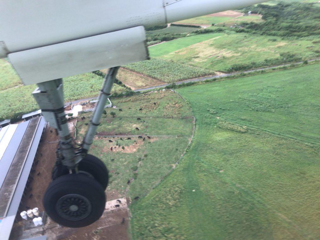 機内からみた石垣牛